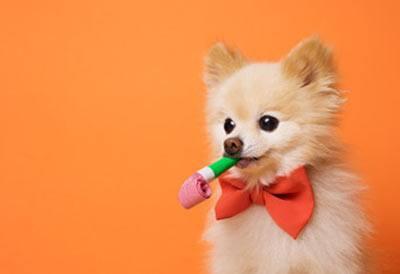 Hunden fejrer fødselsdag