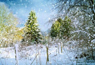 d8b801c3 The Twelve Days of Christmas - Er fra 1780 og denne gange uden musik